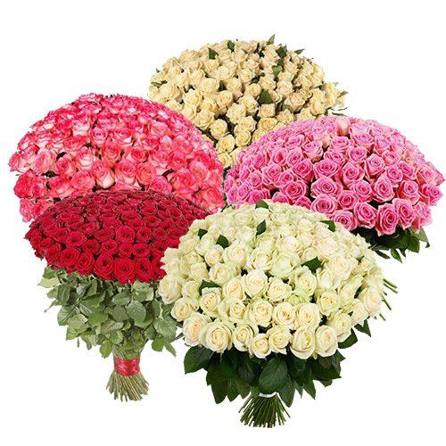 картинка 501 роза разных сортов