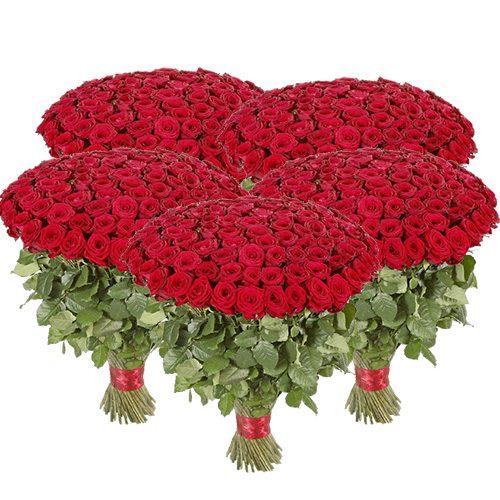 фото товара 501 красная роза